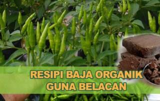Baja Organik Belacan Cecair Pokok Ros Sayur Cili Buah