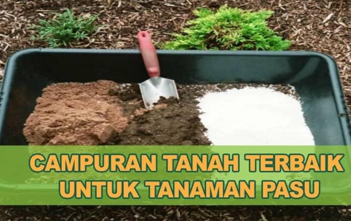 Campuran Tanah Pasu Sayur Bunga Buah