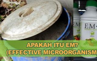 Apa itu EM effective microorgnism malaysia pertanian ikan akuarium ternakan