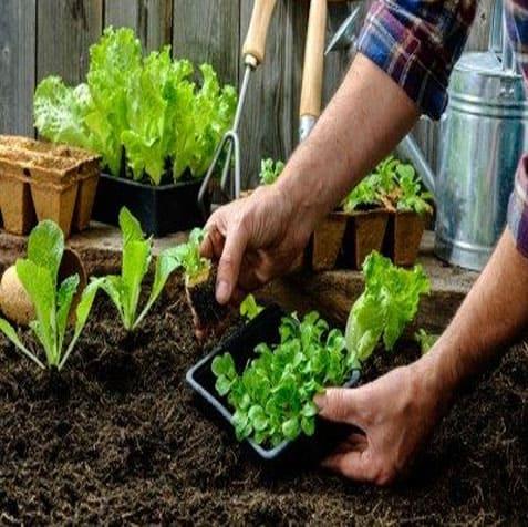 tanam kebun sayur dalam bandar