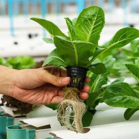 Kebun Bandar Belajar Tanam Sendiri Di Rumah