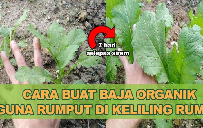 Cara Buat Baja Organik Guna Rumput