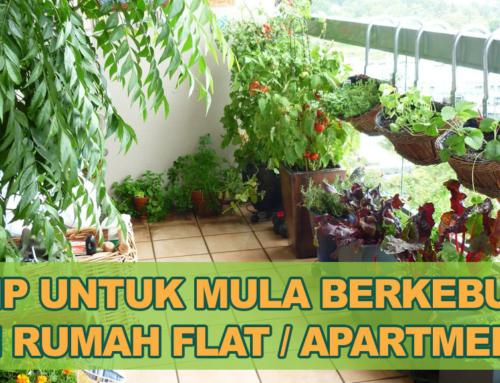 16 Tip Berkesan Untuk Mula Tanam Sayur di Rumah Flat
