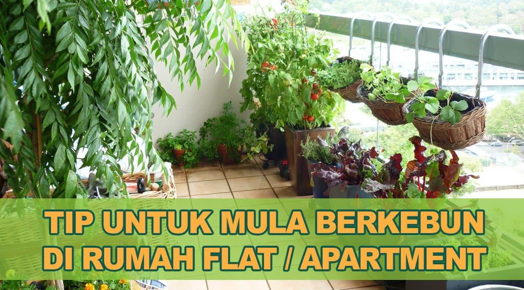 Tanam Sayur di balkoni rumah flat apartment