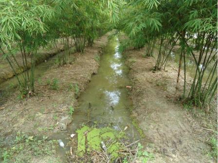 ladang buluh madu di Pahang