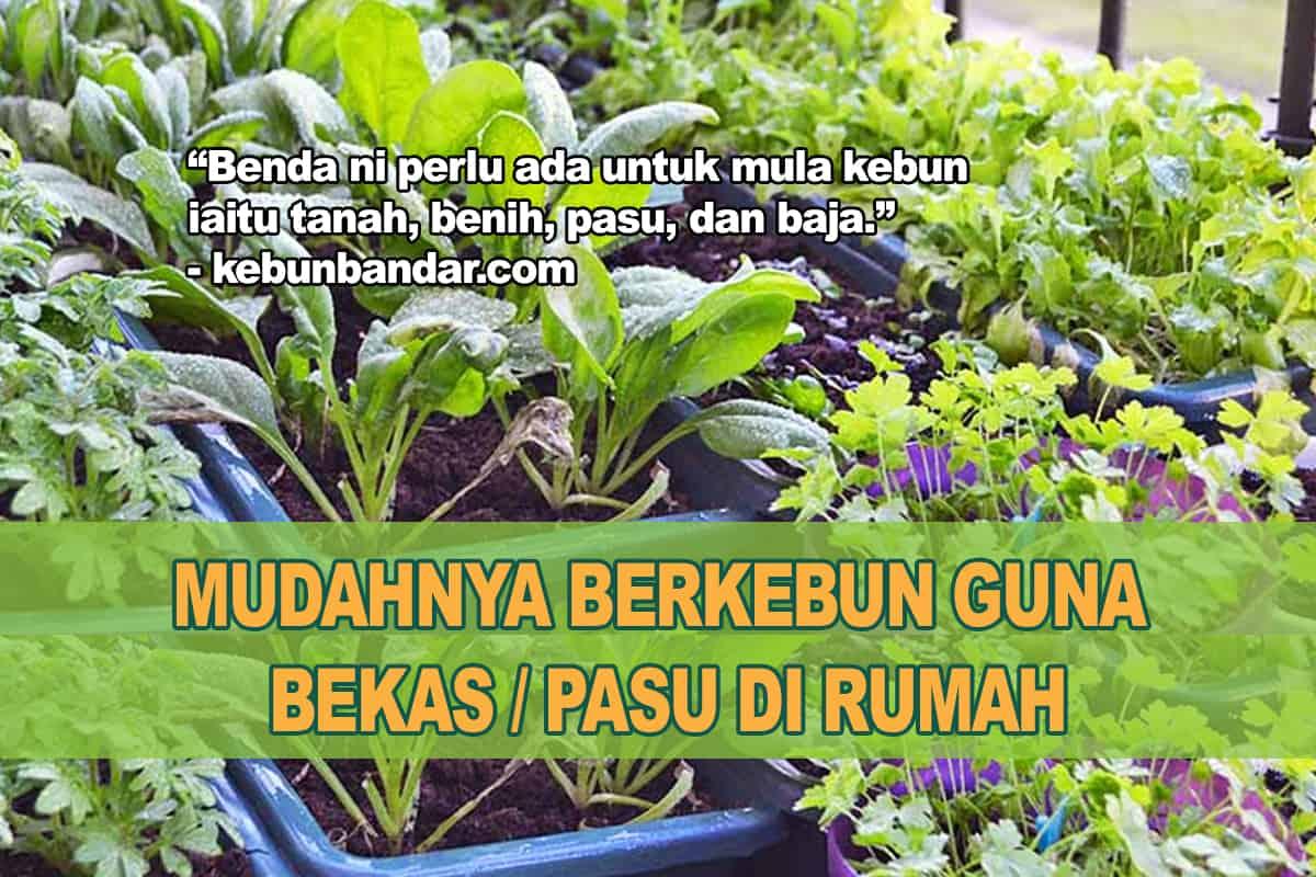 10 Langkah Untuk Mula Berkebun Pasu Di Rumah Kebun Bandar